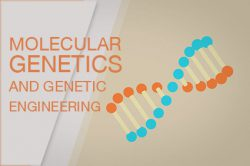 Molecular Genetics and Genetic Engineering