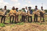 Genome Mapping for Molecular breeding in cassava