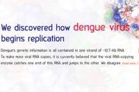 We discovered how dengue virus begins replication